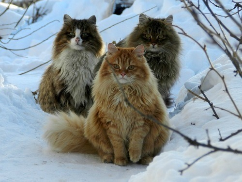 Forest cats
