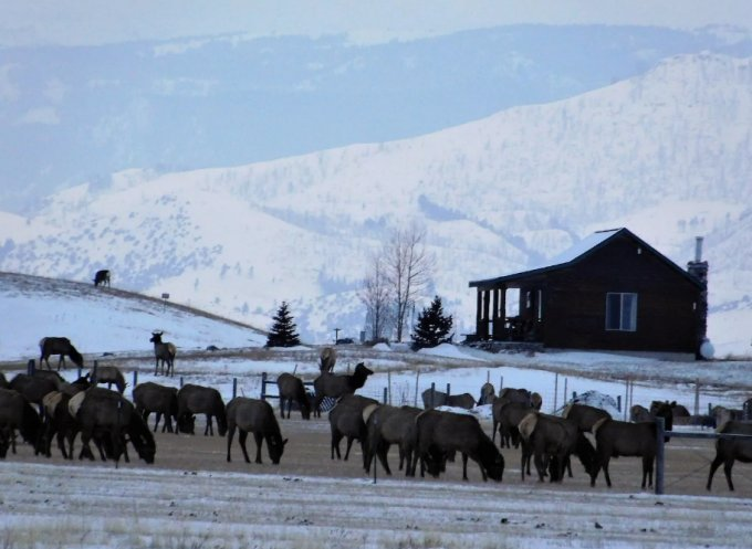 Mountain cabin and elk